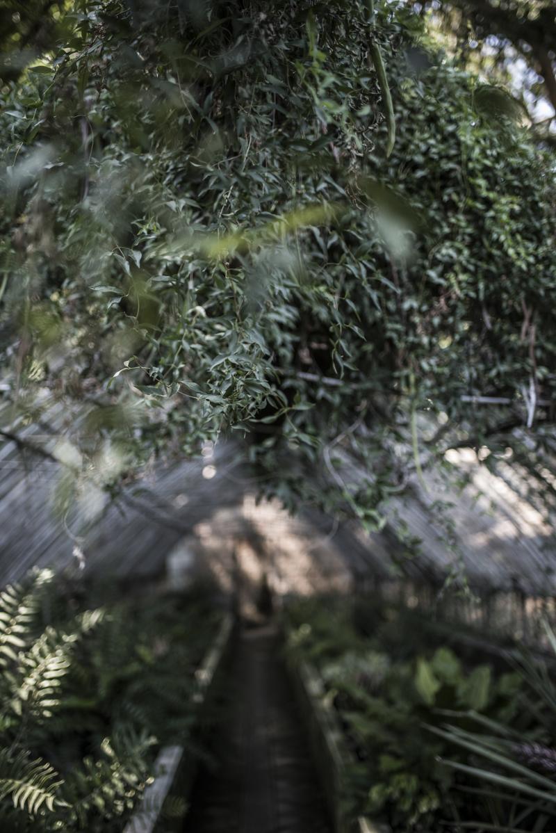 jardin botanico malaga-12
