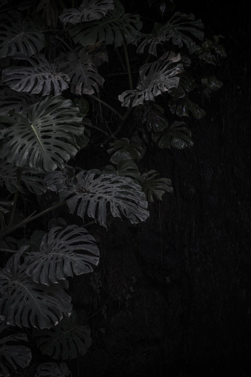 jardin botanico malaga-30