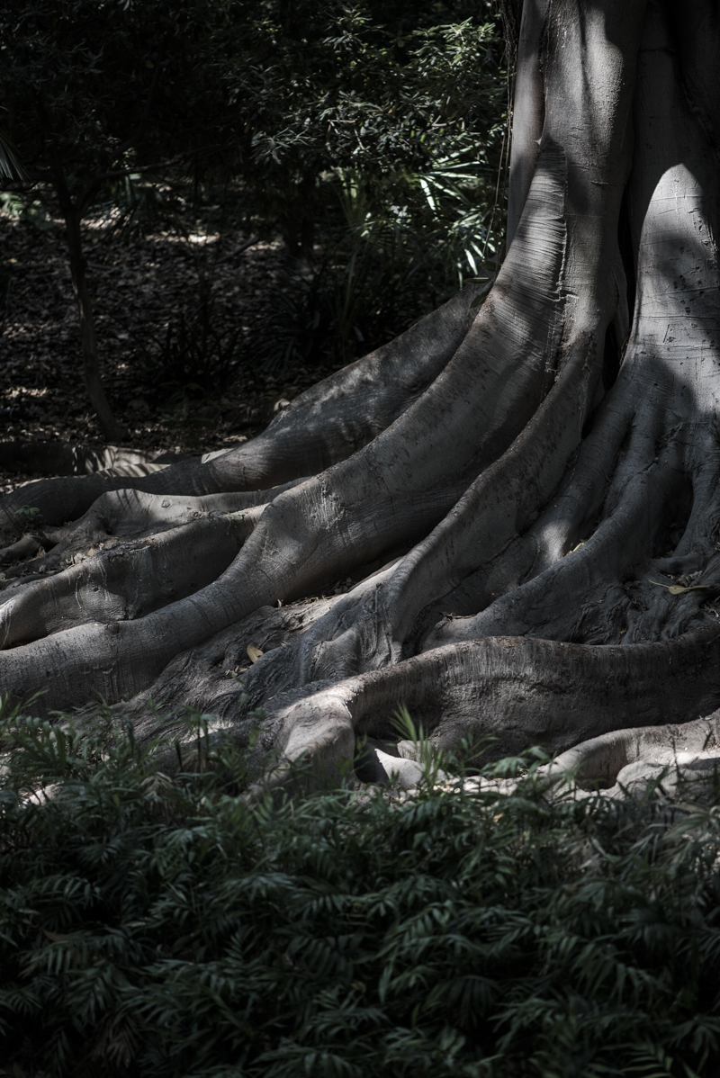 jardin botanico malaga-4