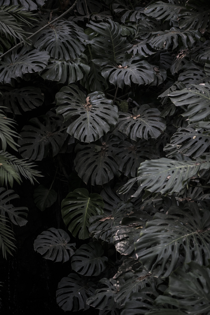 jardin botanico malaga-6