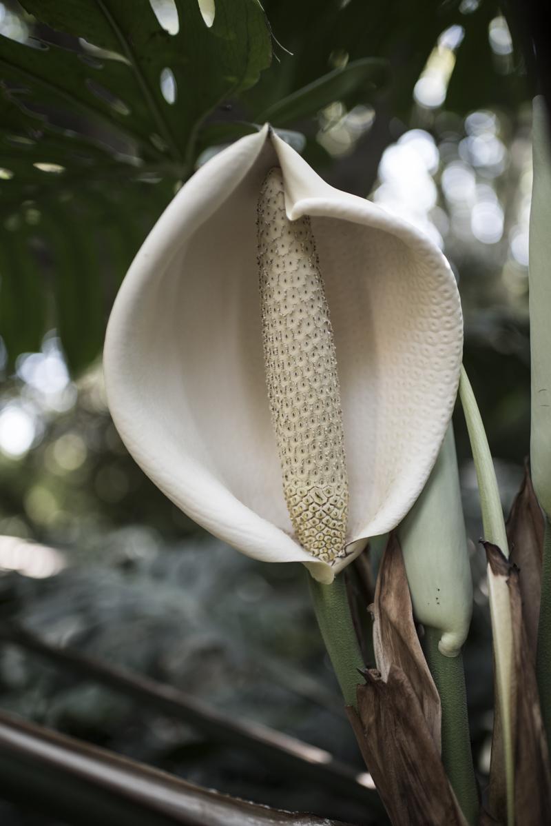 jardin botanico malaga-7