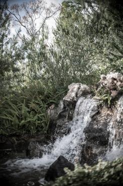 botanic garden Spain -12