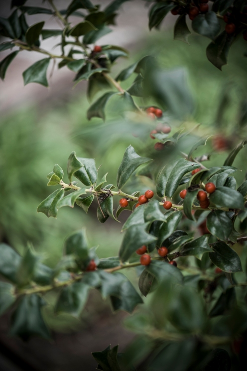 botanic garden Spain -6